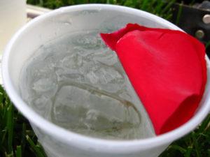 rose pletal in ice