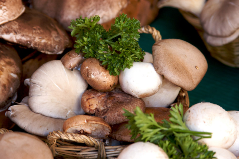 mushrooms - the healtiest foods