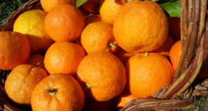 orange fruit