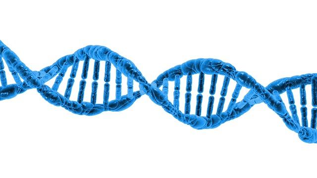 dna telomere sodas