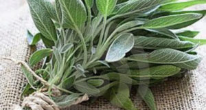 sage on the table
