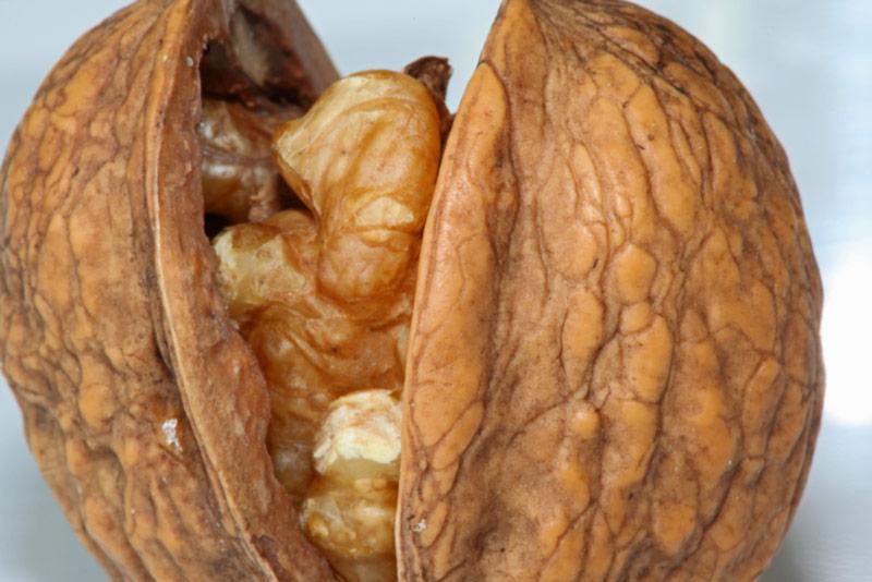 walnut for IQ