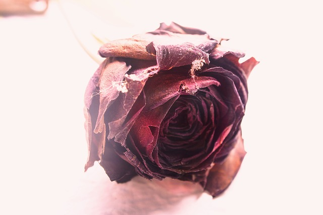 peeling with roses
