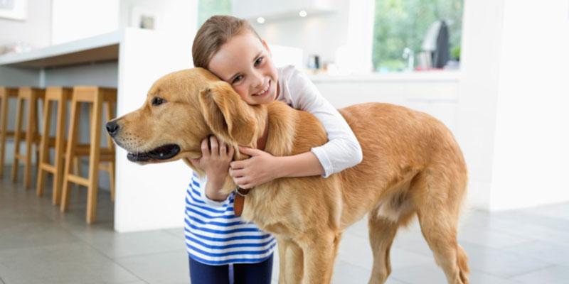 pets kids dog