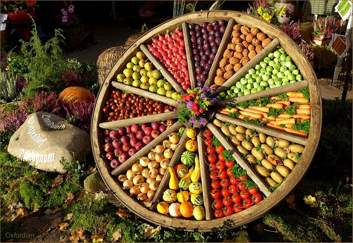 vegetable in circle